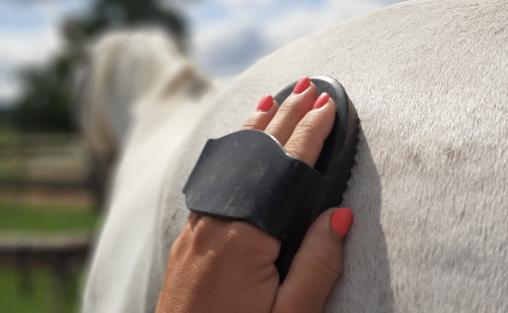 Ako a čím správne vyčistiť koňa – stručný návod